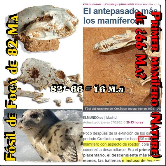 fosil de foca manchada 82 m.a