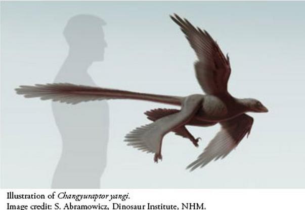 La definición del dinosaurio de cuatro alas no vuela Image9