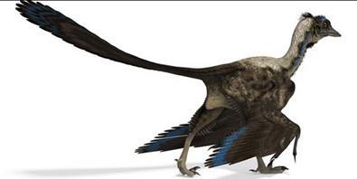 """Un segundo examen provoca que científicos rectifiquen sobre el hallazgo del """"dino-ave"""" Image_thumb3"""
