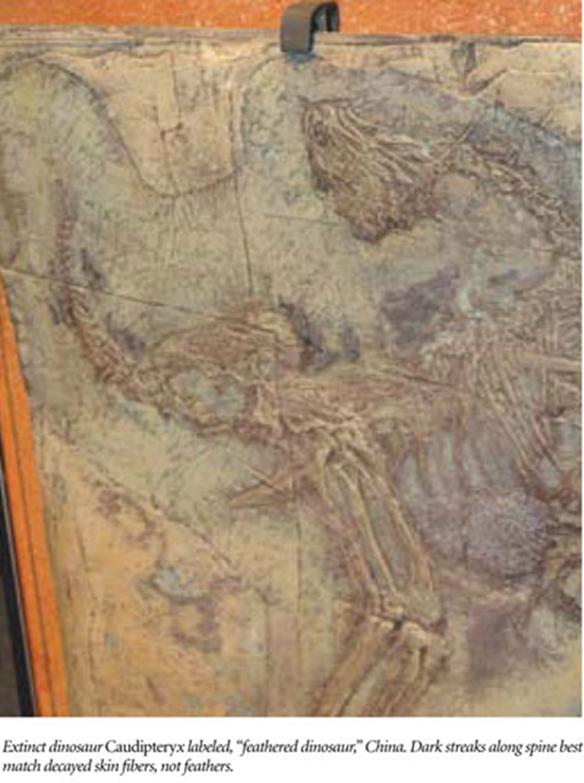 ¿Tuvieron realmente plumas algunos dinosaurios? Image_thumb6