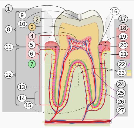 El increíble diseño de la boca de un niño Image